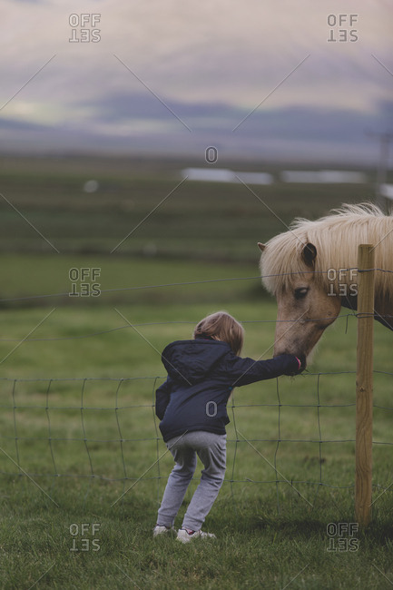 A small child reaching through a fence to pet an Icelandic horse