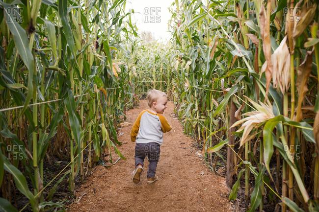 Toddler running through corn maze