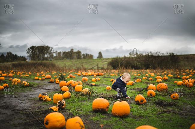 Toddler picking pumpkin from a muddy pumpkin patch