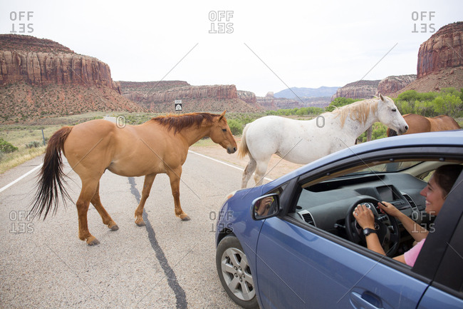 Canyonlands National Park, Utah, USA - May 7, 2018: Wild horses crossing a backroad entrance into Canyonlands National Park