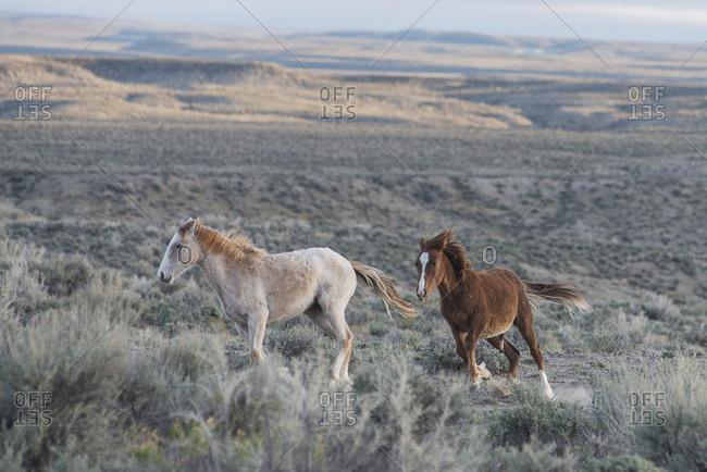 Wild horses amidst plants on field