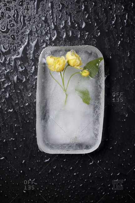 Overhead view of frozen flowers on table