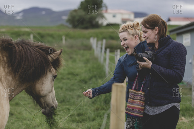 Female tourists feed an Icelandic horse
