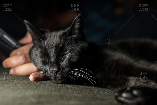 Close up of black cat resting head on owner's hand while taking a nap