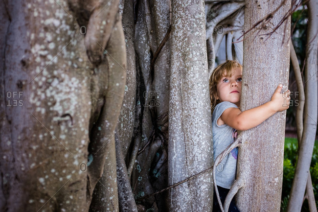 Young girl climbing a banyan tree