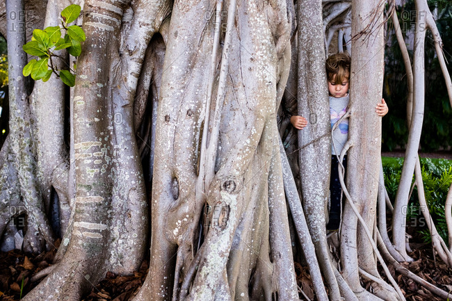Girl hiding inside a banyan tree