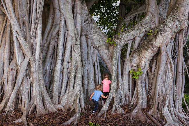 Children playing inside a banyan tree