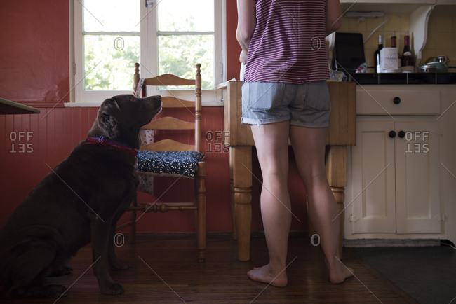 Dog begging for food in kitchen