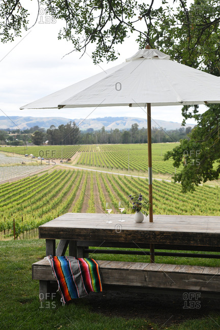 Picnic table beside vines in a vineyard