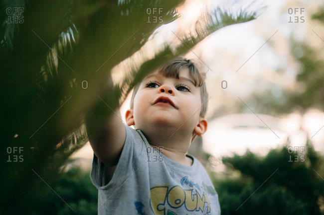 Brunette toddler reaching for palm leaf