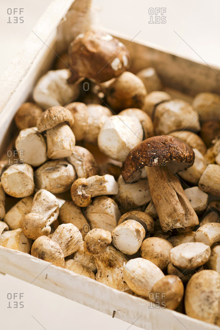 Close up view of a crate full of porcini mushrooms