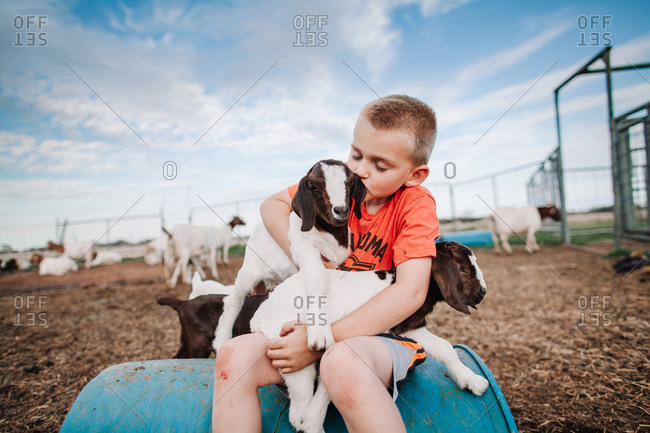 A boy holding a baby goat in his lap