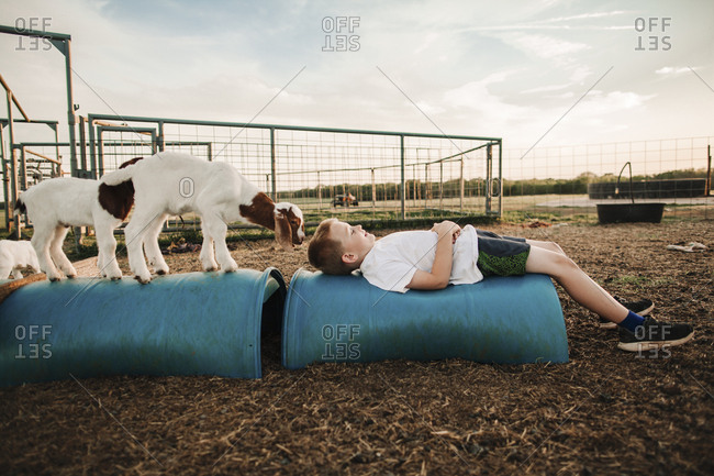 A boy laying in a goat pen