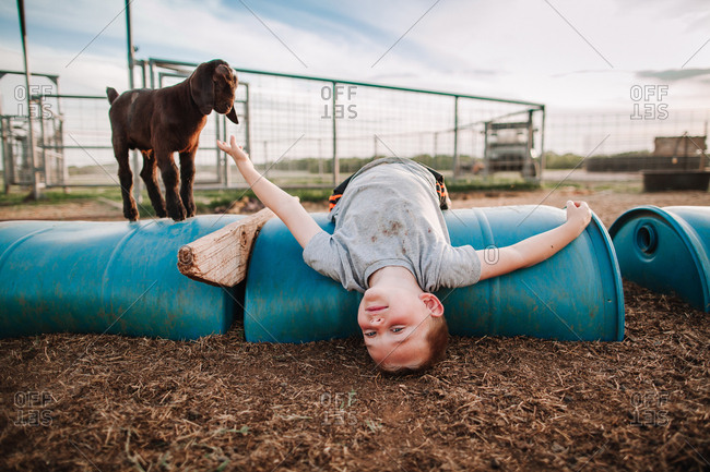 A boy laying upside down in a pen of goats