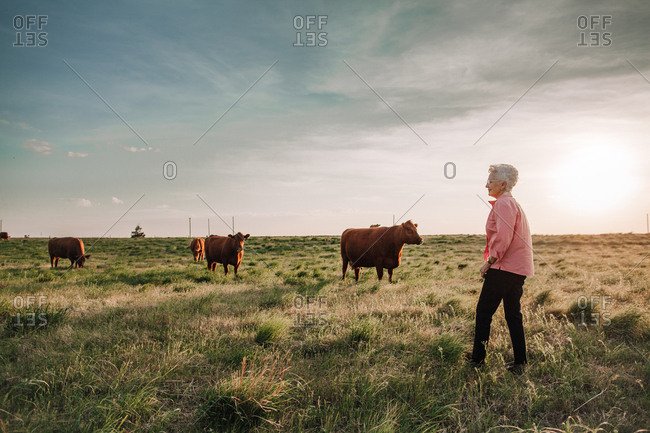 A senior woman looking at a herd of cattle