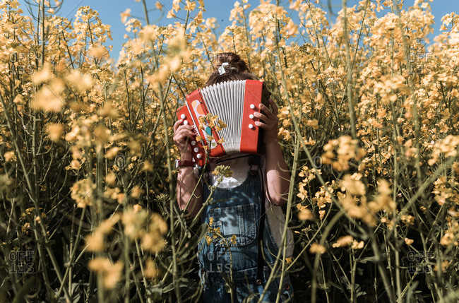A girl stands on countryside in the middle of yellow flowers with accordion