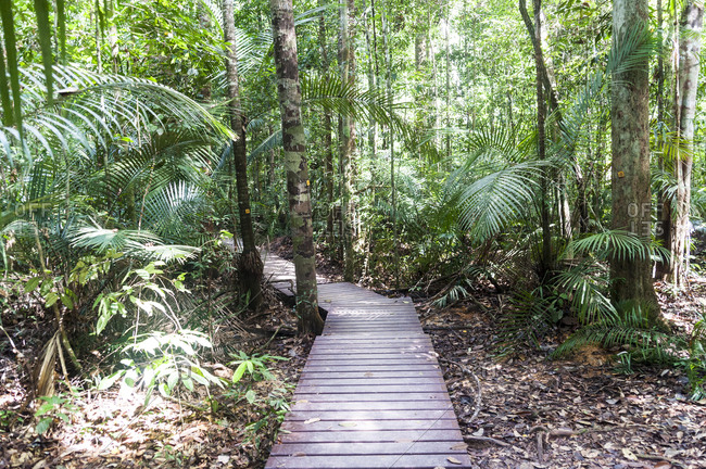 Wooden steps on path through Taman Negara National Park in Malaysia
