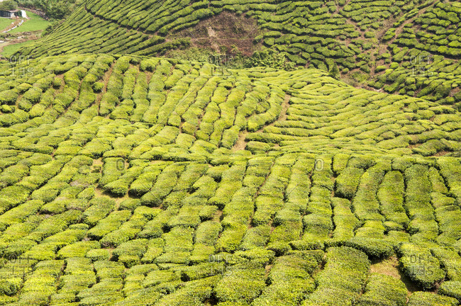 High angle view of Malaysian countryside
