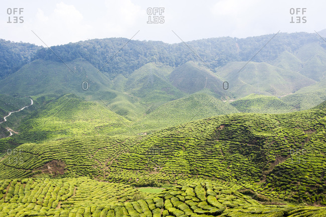 Sunny afternoon view of Cameron Highlands
