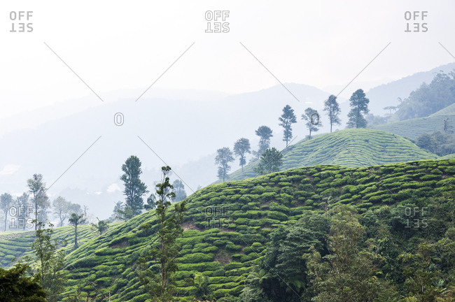 Foggy Cameron Highlands scenery in Malaysia