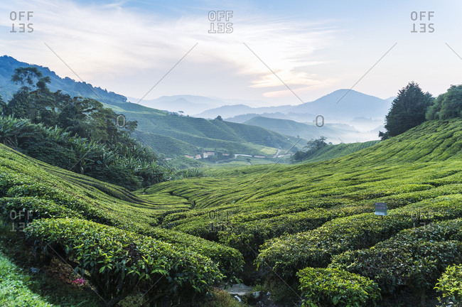 Secluded valley across Cameron Highlands