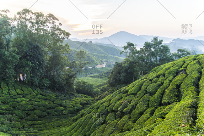 Shadowy hillside in Malaysian Cameron Highlands
