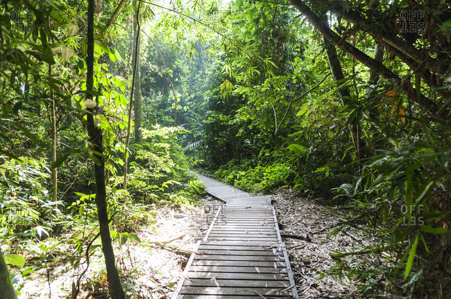 Wooded pathway in Taman Negara National Park in Malaysia