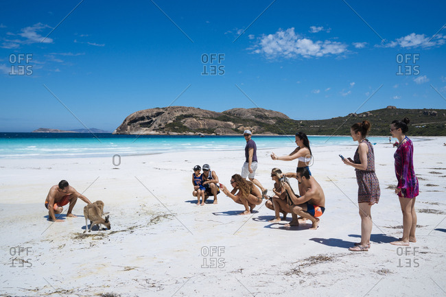 Esperance, Australia - February 9, 2018: Tourists petting and photographing kangaroo at Lucky Bay in Cape Le Grand National Park