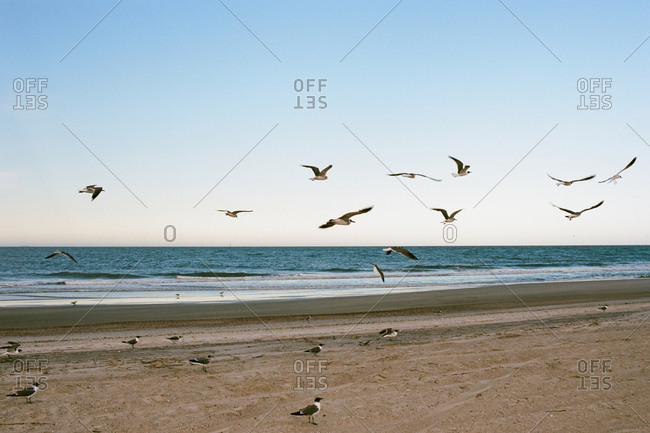 Flock of seagulls on empty beach