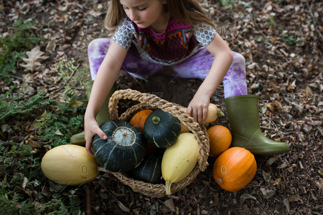 Little girl collecting gourds in a basket