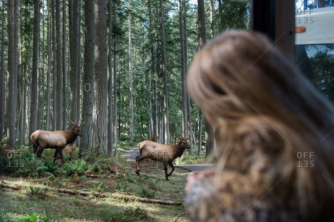 Girl watching elk on animal nature tour