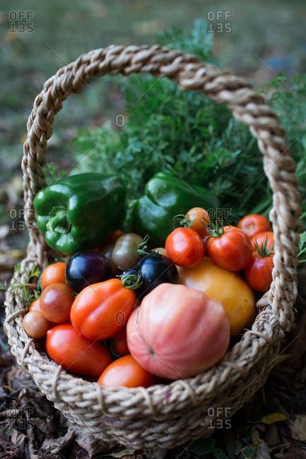 Fresh picked veggies in a basket