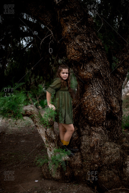 Brunette girl standing on thick tree root in forest