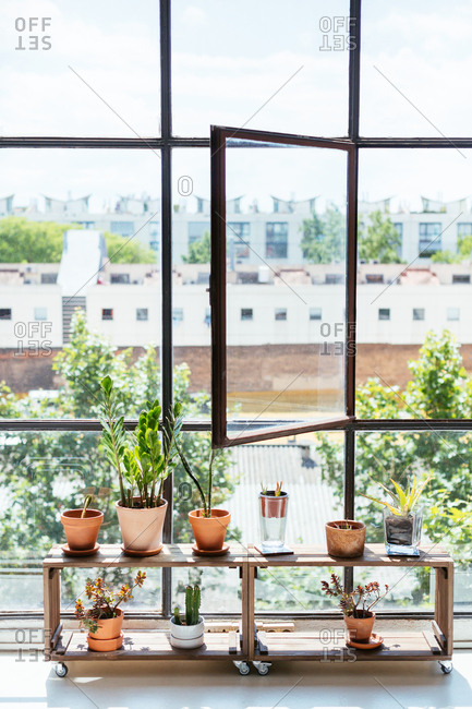 Big window and shelf of full of plants in a creative office