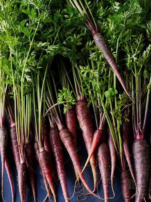 Still life of purple carrots, overhead view