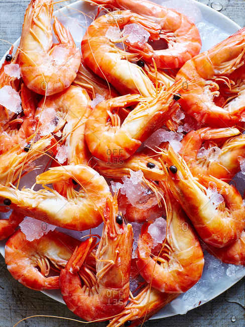 Still life of tiger prawns on ice, overhead view