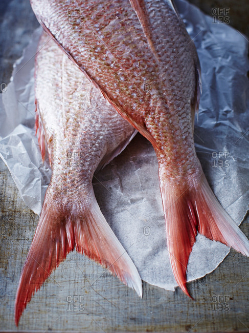 Still life of two whole snappers on greaseproof paper, cropped overhead view