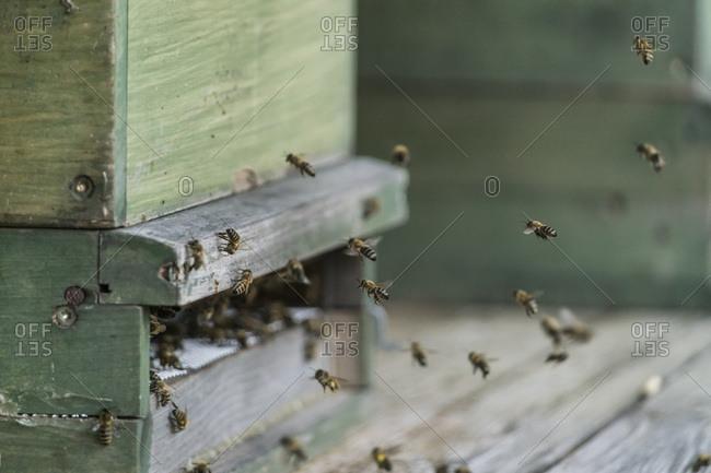 Germany- organic farm- bees flying at beehive