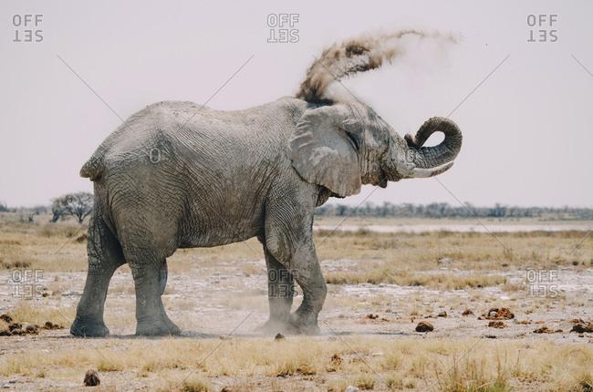 Africa- Namibia- Etosha National Park- elephant- sand bath