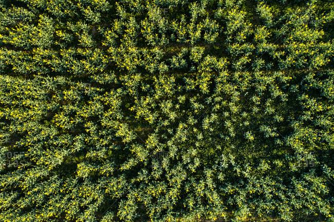 Germany- Baden-Wuerttemberg- Swabian Alb- Aerial view of Schurwald in spring