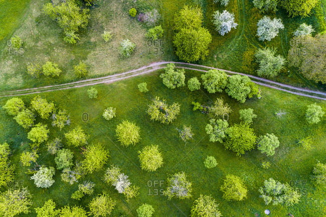 Germany- Baden-Wuerttemberg- Swabian Franconian forest- Rems-Murr-Kreis- Aerial view of meadow with scattered fruit trees and dirt road