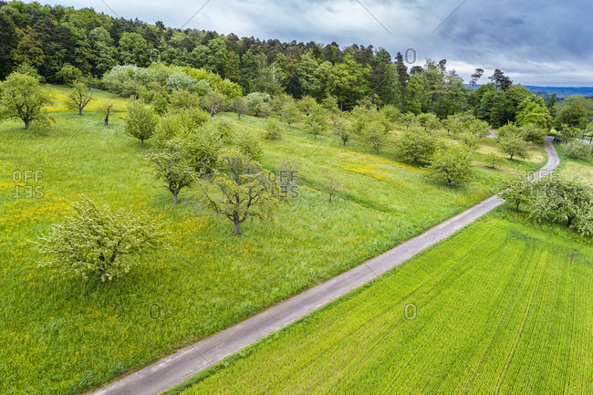 Germany- Baden-Wuerttemberg- Swabian Franconian forest- Rems-Murr-Kreis- Aerial view of meadow with scattered fruit trees and road