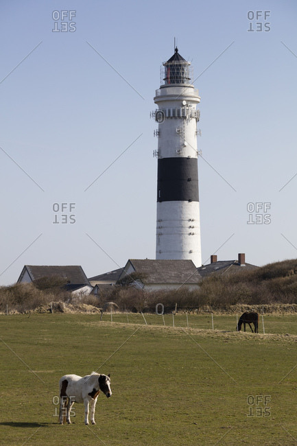 Germany- Schleswig-Holstein- North Frisian Islands- Sylt- Kampen- Rotes Kliff- lighthouse and horses on meadow