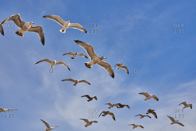 Seagulls flying against blue sky