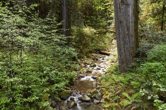 Smith River in Jedediah Smith Redwoods State Park, California