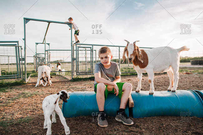 A boy sitting in a goat pen
