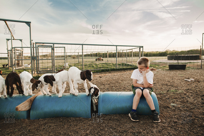 A boy sitting in a pen with baby goats