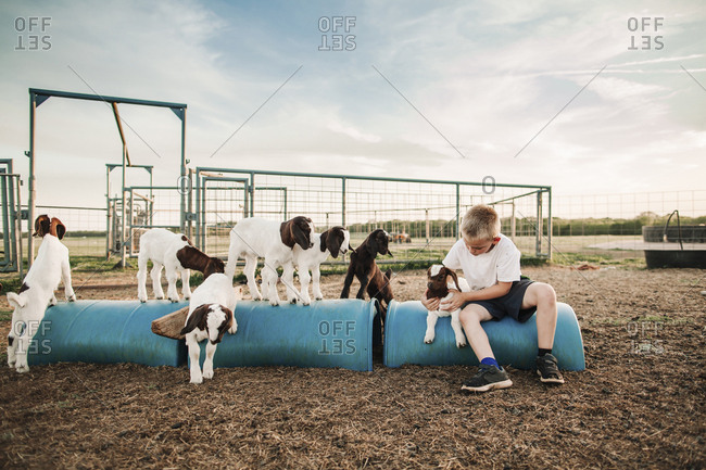 A boy sits in a pen with baby goats