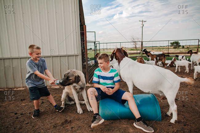 Boys playing in a goat pen with their pet dog