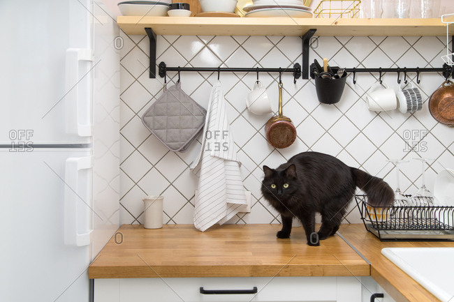 Home kitchen interior with black cat standing next to open shelves, big sink and vintage copper pots